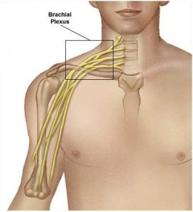 Brachial Plexus 272x300 Brachial Plexus And Its Injury