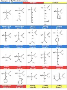 aastructures 226x300 Amino acids: Memorizing names and classifying made easy
