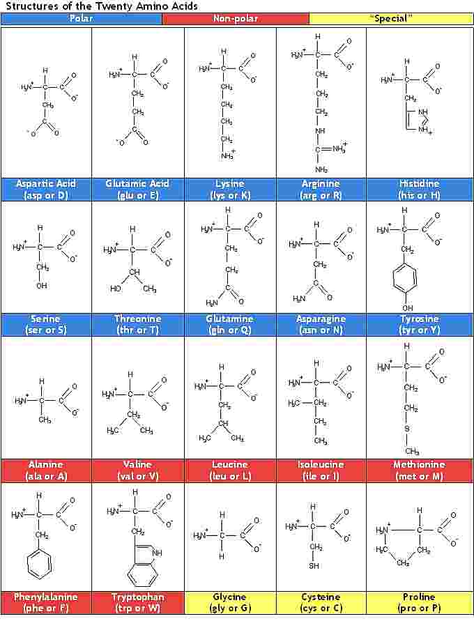 20 amino acids and their structures. Click to enlarge.