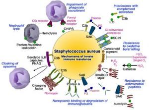 Virulence factors and pathogenesis