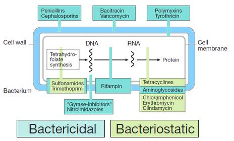 Antimicrobials Antibiotics: Inhibitors of Protein Synthesis
