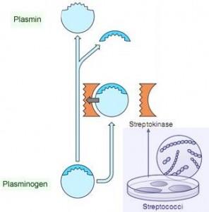 streptokinase therapeutic enzyme