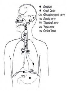 cough receptor