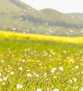 pollen allergic