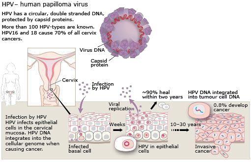 human papillomavirus retrovirus)