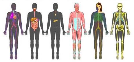 Anatomy Anatomy Ebooks : Study Online