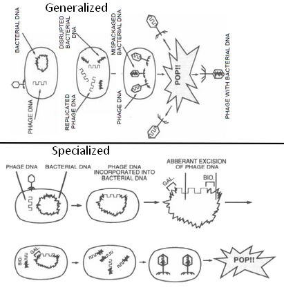 Transduction General Principles in Bacteriology Made Easy