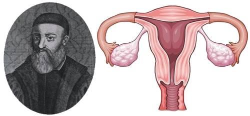 fallopio and fallopian tube