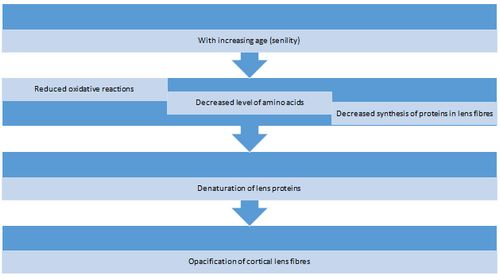 Course of events leading to the formation of cataract in old ages