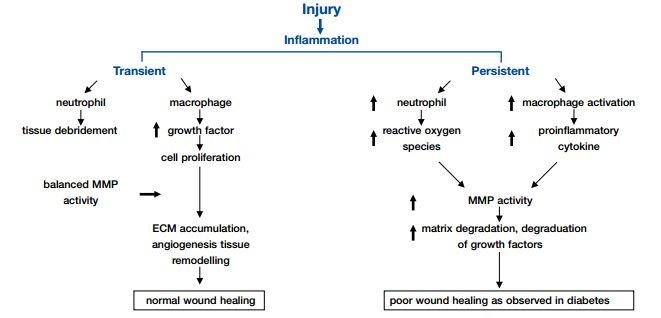 DM wound healing