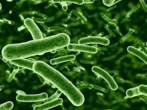 Antibiotics and bacteria