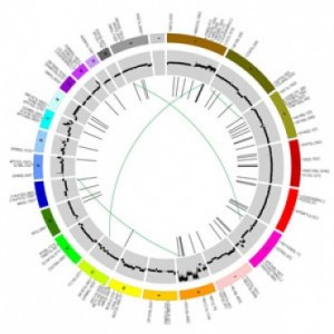 rp_gene-cancer-300x300.jpg