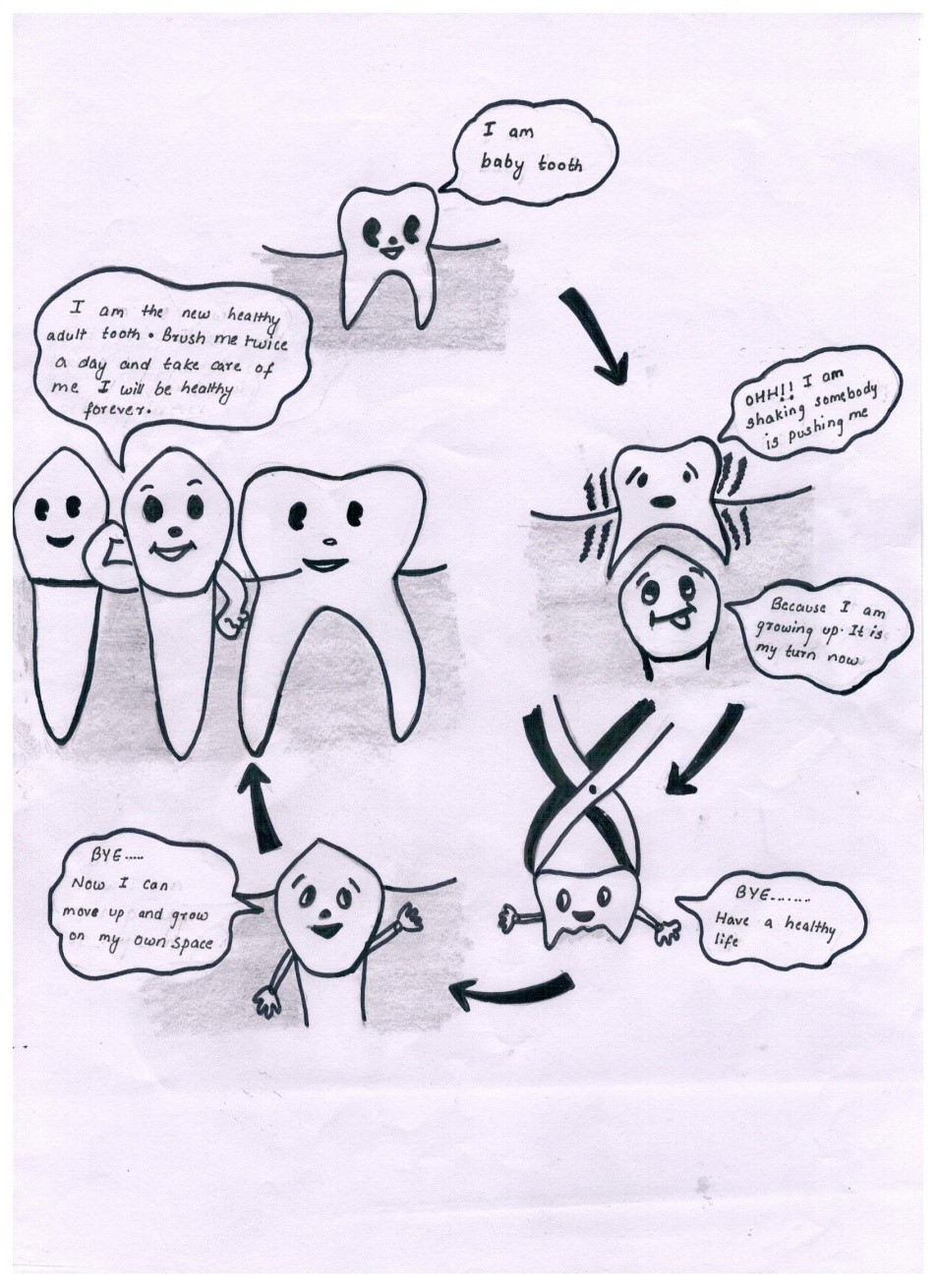 tooth loss cycle