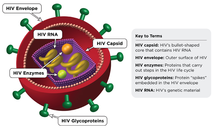 HIV-virus-structure