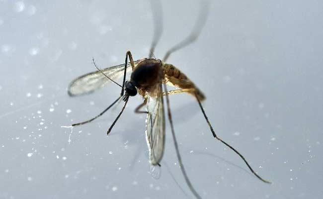 zika-virus-vector